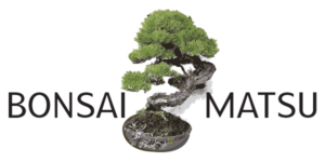 Bonsai Matsu Logo